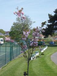 FarnboroughHill TennisCourts