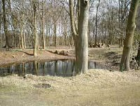 ashridge-Pond-15th-Opened-u.jpg