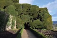 Powis YewTrees