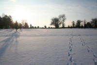 Staffordshire-snow-golf-014_website.jpg
