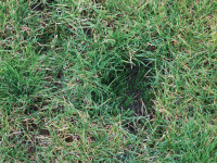 grass growth divot mix