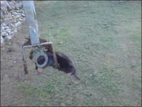 CuparGC Mole