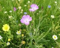 02 wild flower mat.jpg