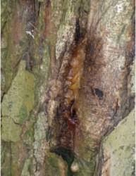 TreesWeb6.jpg