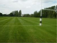 RugbyPitchAfter8Weeks