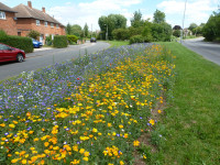 Eye catching annual flowers on a Leicestershire highway
