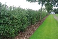 Spurs Hedge