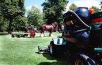 Heavy Horse 8.jpg