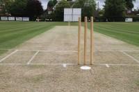 Cricket Strip