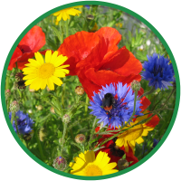 Bird & Insect Attraction Wildflower Seeds