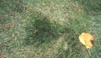 Field turf artificial deep pile. modified jpg.jpg