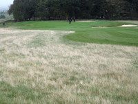 A4 Cleanly maintained deep rough after being cut back to 5 inches