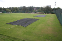 tennis germination sheets