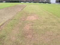 newport-cricket--disry-pic.jpg