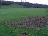 wrekin golf club badger damage 1.jpg