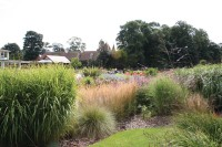 Grasses.jpg