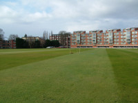 december cricket outfield