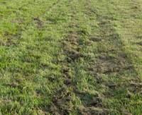 john-o-gaunt-grass-clipping.jpg
