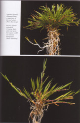 turf-book-grass-pictures.jpg