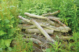Log piles – suitable habitat for hibernating reptiles, invertebrates and amphibians