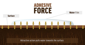 Adhesive Forces Explained