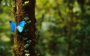 butterfly 3001330b