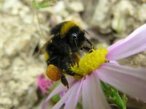 1280px Bumblebee 05