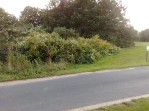 Royal Mid Surrey