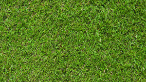 Lorne 80% fescue 20% browntop bent grass