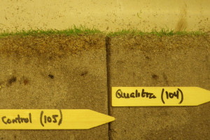 Qualibra thatch reduction mr
