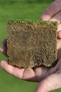 Thatch build up in surface layers