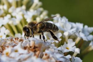 Bee-1651-2