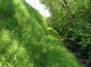 Surrey 184&Fraser Hwy Full Vegetation[1]