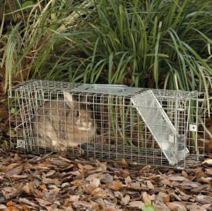 Rabbits Cage Trap
