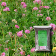 Flowering Lawn Wildflower Seed