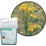 Professional Weed Killers For Ragwort