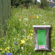 Coastal Areas - 100% Wildflower Seeds