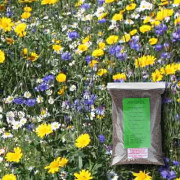 Restore & Enrich - 100% Wildflower Seeds