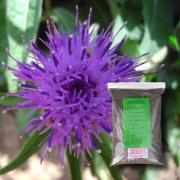 Wildflower Seeds (Loam/Alluvial Soils) - MWF 3
