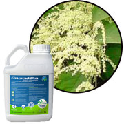 Professional Weed Killers For Japanese Knotweed
