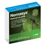 Nemasys No Ants