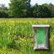 Wetland & Pond Edge - 100% Wildflower Seeds