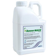 Professional Anthracnose Control