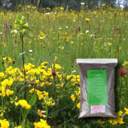 Dry, Sandy Loam Soil - 100% Wildflower Seeds