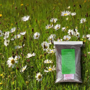 General Purpose - 100% Wildflower Seeds