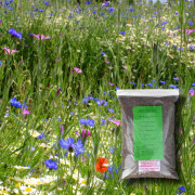 Cornfield Annuals Mix - 100% Wildflower Seeds