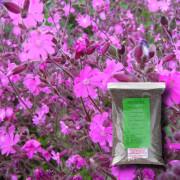 Hedgerow & Light Shade - 100% Wildflower Seeds