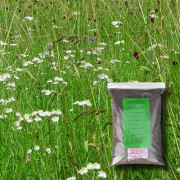 Wild Bird Attraction - 100% Wildflower Seeds